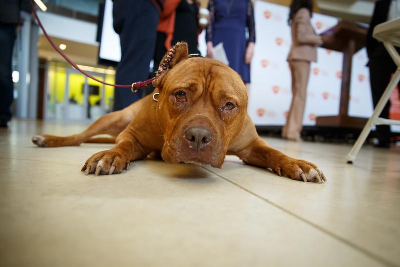 Rosie ambassador Dog