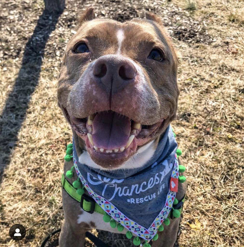 Shortcake dog smiling