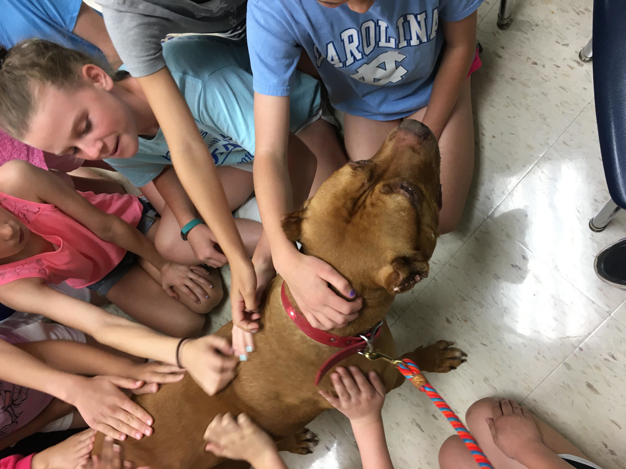 Rosie ambassador dog visiting kids